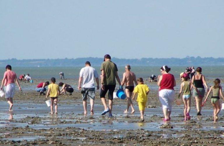Réglementation et alertes sanitaires liées à la pêche à pied